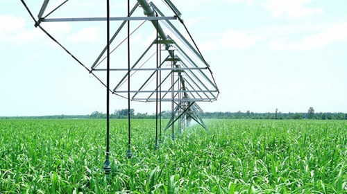 Center Pivot (C.P) irrigation system at Thanh Long Bien Hoa Farm